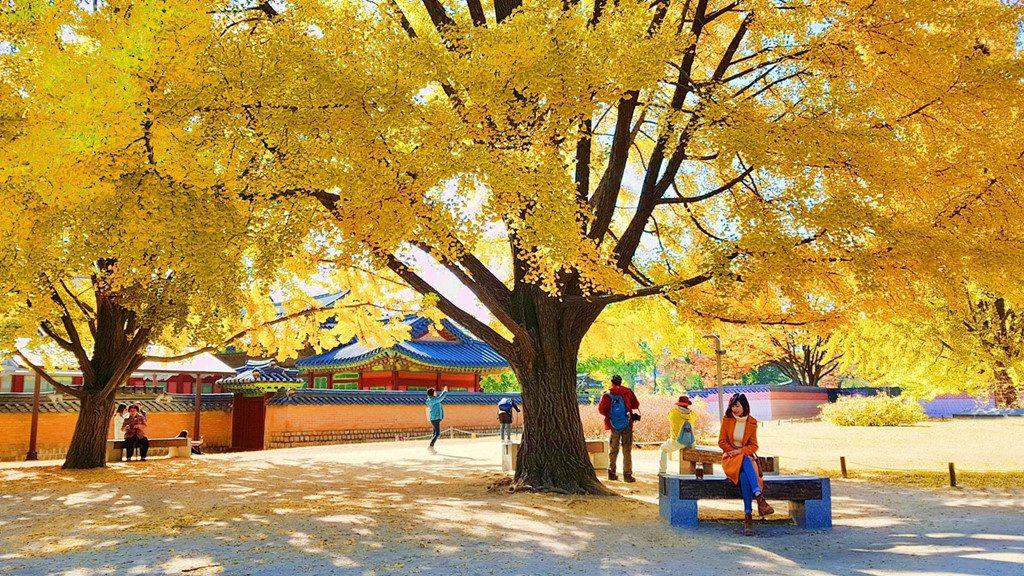 Cung-điện-hoàng-gia-Gyeongbokgung-mùa-thu-1024x576
