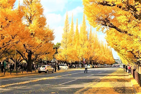 Dai-lo-Icho-Namiki-o-Tokyo